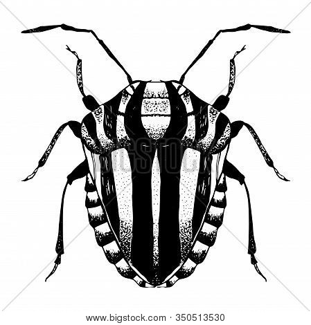Hand Drawn Sketch Of  Striped Beetle. Vector Illustration Of Insect. Black And White Entomological D
