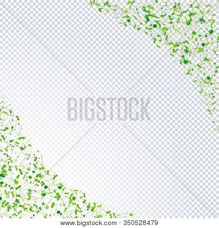 Group Of Young Sprouts Seedlings On Transparent Background With Place For Text. Fresh Young Sprouts