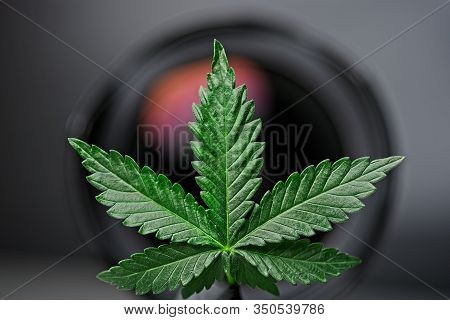 Green Cannabis Leaf With Lens In Background