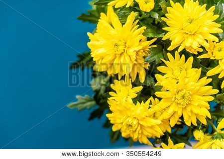Bouquet Of Yellow Chrysanthemums On A Classic Blue Background. Yellow Flowers On Classic Blue. A Pot
