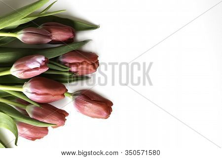 Red Tulips Isolated On A White Background With Copy Space