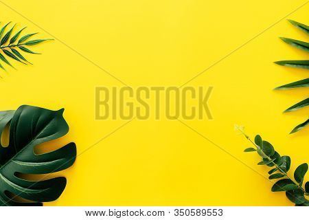 Tropical Green Leaf On Yellow Wall Texture Abstract Background.