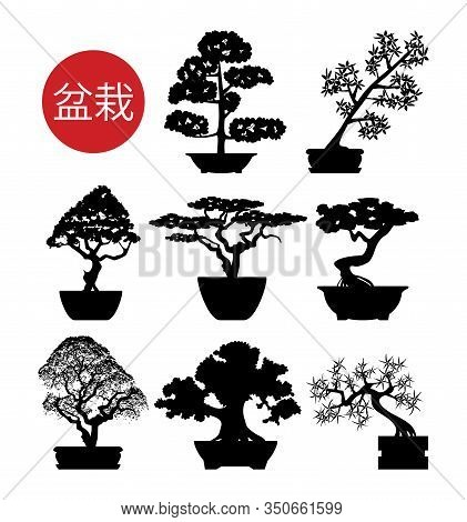 Vector Set Of Black And White Bonsai Trees In Pots With