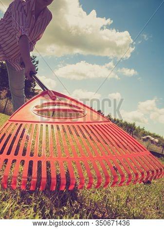Unusual Angle Of Woman Raking Leaves Using Rake. Person Taking Care Of Garden House Yard Grass. Agri