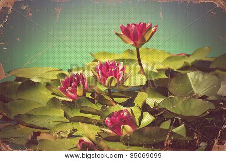 Pink Waterlilies In Pond .vintage Flowers Card On Old Paper Background