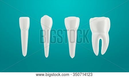 Teeth Isolated On Green Background. Arranged In A Row.  3D Illustration. Incisor, Canine Premolar An