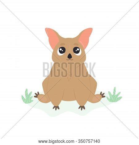 A Cute Australian Possum. Animal Character Design.