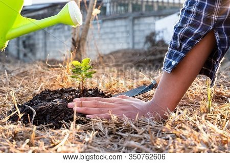 Young Men Join Hands Together To Plant Trees On Fertile Ground. The Concept Of Protecting Nature.