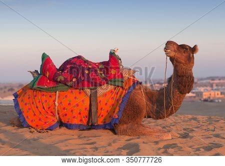 Beautiful Decorated Dromedary Camel Waiting Tourists For Riding Over Dunes In Thar Desert Near Jaisa
