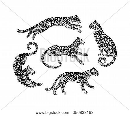 Set Of Jaguar Spotted Silhouettes In Different Poses. Vector Wildcat Animal Graphic Illustration. Bl