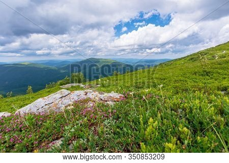 Blooming Wild Herbs On The Grassy Hill. Beautiful Nature Scenery Of Alpine Meadows In Carpathian Mou