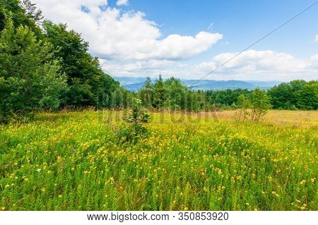Mountain Meadow. Beech Forest On The Edge Of A Hill. Wonderful Summer Landscape With Fluffy Clouds O