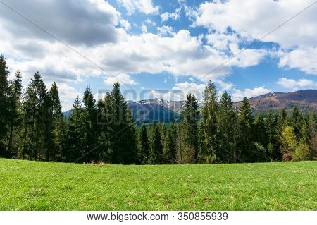Mountain Landscape In Spring. Fir Forest On The Green Grassy Meadow. Ridge With Snow Capped Tops In