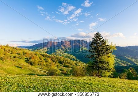 Wonderful Rural Landscape In Mountains At Sunset. Trees On The Meadow In Green Grass In Evening Ligh