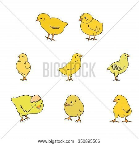 Set Of Chicken Yellow Hand Drawn Line Drawing. Contour Drawing.scrawl.drawing For The Easter Holiday