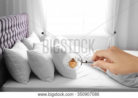 Woman With Magnifying Glass Detecting Bed Bug, Closeup