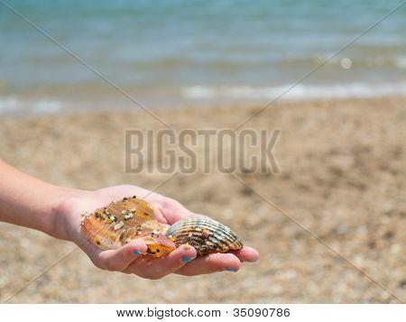 A Girl's Hand Holding Seashells