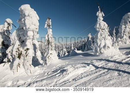 Freezing Winter Scenery With Snowcapped Trees And Clear Sky Bellow Lysa Hora Hill In Moravskoslezske