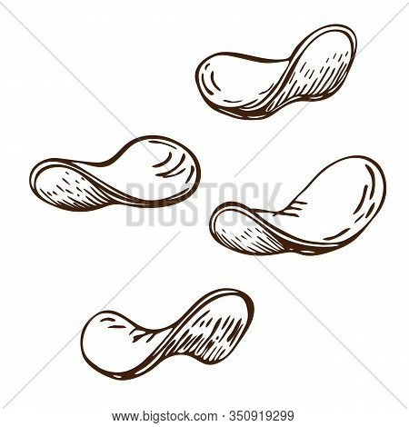 Fried Potato Chips Slices Hand Drawn. Vector Sketch Of Crunchy Delicious Potato Crisps Isolated On W