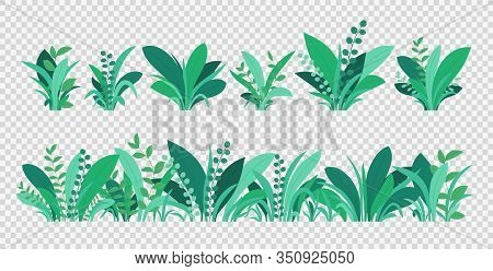 Green Grass. Spring And Summer Various Plants, Grass And Bushes. Natural Elements Of Grass Isolated