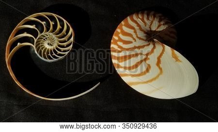 Chambered Nautilus Shell Sections Isolated On Black Background