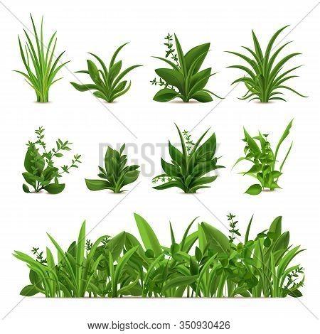 Realistic Grass Bushes. Green Fresh Plants, Garden Seasonal Spring And Summer Greens And Herbs, Bota