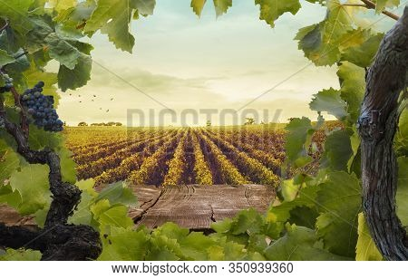 Wooden Table. Spring Design With Vineyard And Empty Display. Space For Your Montage. Autumn Grapes H