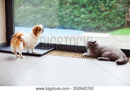 Cat And Dog At Home Together Near Window