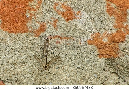 Dragonfly Copulation On A Background Of A Wall Of Red Bricksdragonfly Copulation On A Background Of