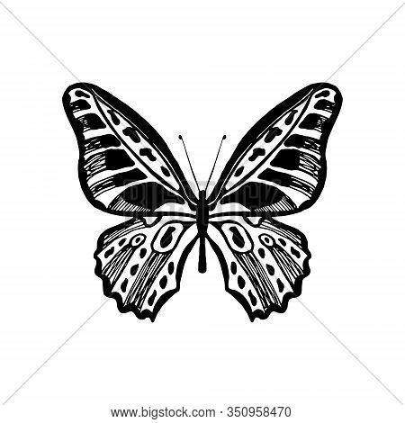 Hand Drawn Butterfly. Vector Illustration Of Winged Insects. Entomology Sketch Isolated On White. Bl
