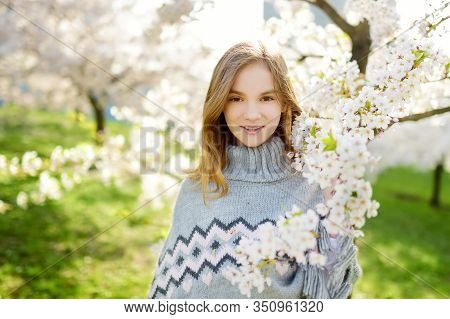 Adorable Young Girl In Blooming Cherry Tree Garden On Beautiful Spring Day. Cute Child Picking Fresh