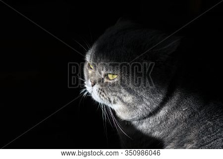 Pathetic Cat With Yellow Eyes In The Dark.