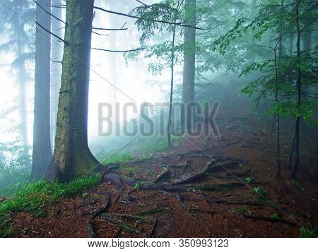 A Mystical Atmosphere In The Misty Forest Of Hochhamm Mountain, Urnäsch (urnaesch Or Urnasch) - Cant