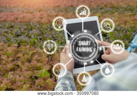 Agronomist Using Mobile Tablet Computer Analysis Data Development With Visual Icon In Hydroponic Gre