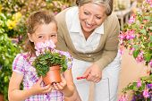 Grandmother and granddaughter holding purple potted cyclamen at garden center poster