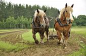 Working horse with a farm field in the background poster