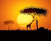 Tranquil sunset scene in africa.  Silhouette animals and trees in africa sunset background. poster