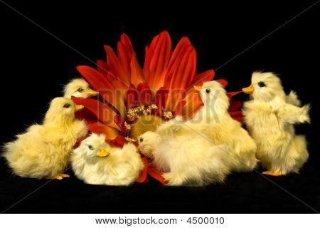 Six baby ducks explore huge orange flower. poster