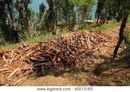 Large Timber Pile