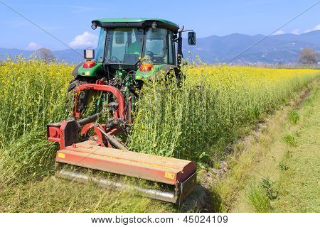 tractor farming on canola field