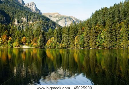 Lake In A Forest