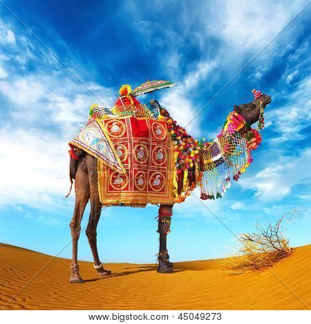 Camel in desert. Camel fair festival in India, Rajasthan, Pushkar. Adventure travel landscape background.