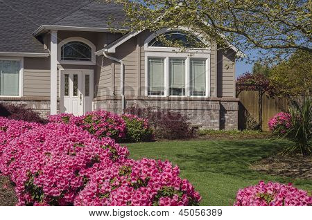 House With Pink Rhododendrons