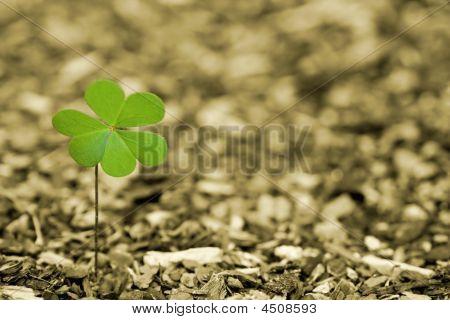 A Little Bit Of Irish Luck