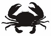 Single crab silhouette isolated on white background. poster