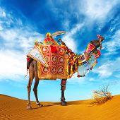 Camel in desert. Camel fair festival in India, Rajasthan, Pushkar. Adventure travel landscape background. poster