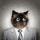 Funny fluffy cat in a business suit businessman. collage poster