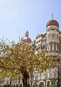 Vertical landscape of a tree full of pigeons which has a protection order for the birds with the Taj Hotel in the background. The hotel stands in full view of the India Gateway and both landmarks are very popular destinations for touris to Bombay India poster