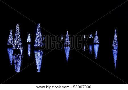 Christmas Trees Reflecting