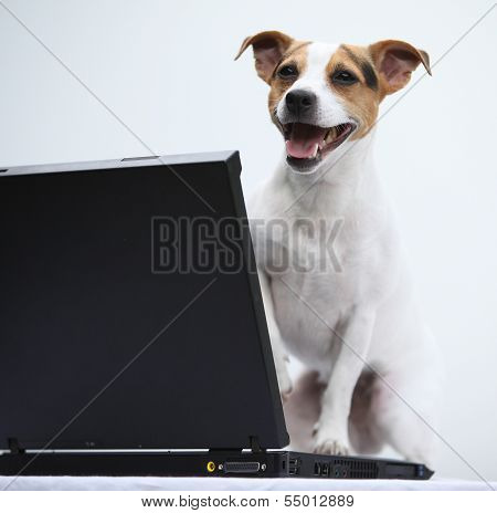 Jack Russell Terier With Notebook